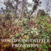 worldwidetpromo